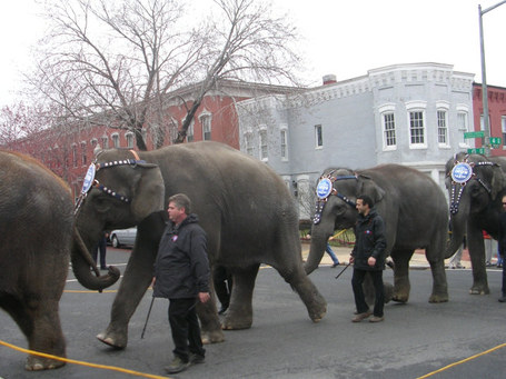 2009_0317_elephants5_medium