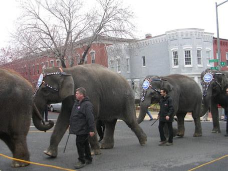 2009_0317_elephants5_medium