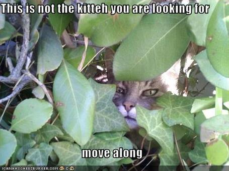 Funny-pictures-cat-hides-from-you_medium