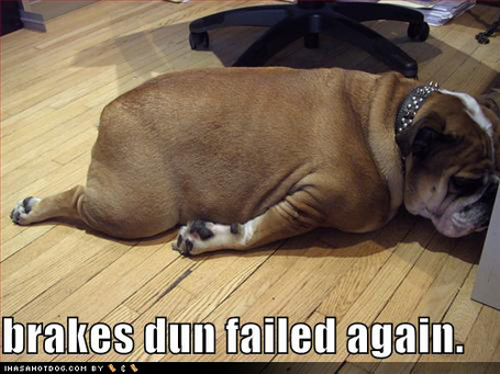 Funny-dog-pictures-brakes-fail-bulldog_medium