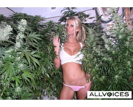 31112918-weed-plant_medium