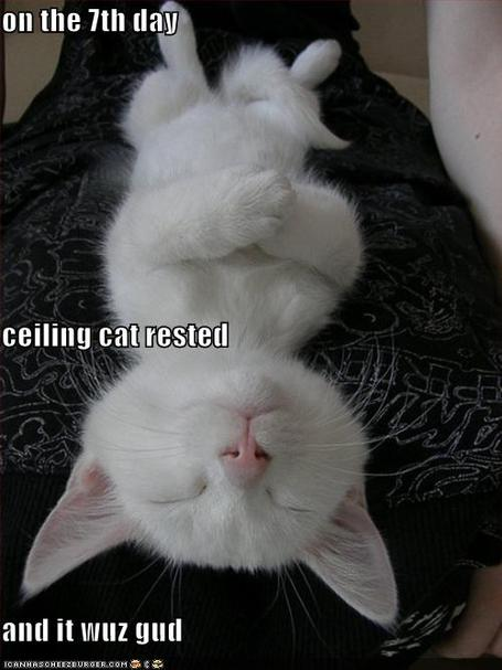 Funny-pictures-ceiling-cat-rests-on-the-seventh-day_medium