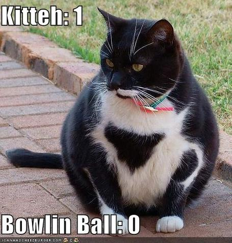 Funny-pictures-bowling-ball-cat_medium