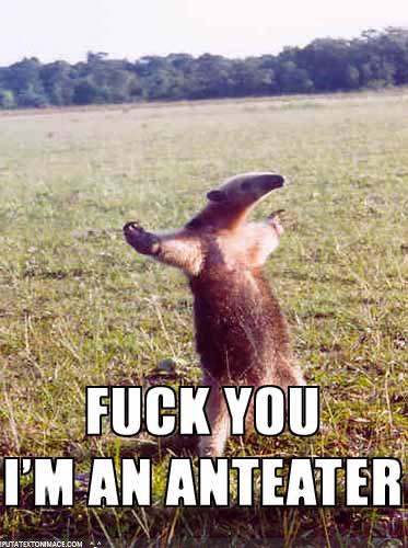Ant-eater_medium
