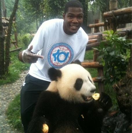 Kevin-durant-panda-bear_medium