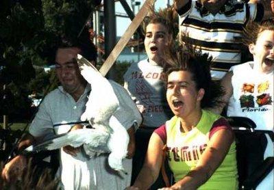 Seagull-rollercoaster_medium