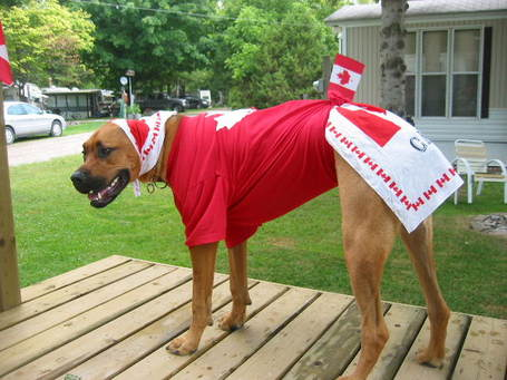 Canadian_dog_medium