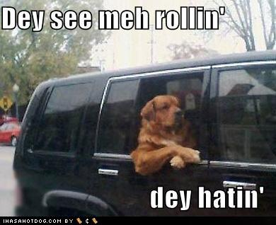 76dd6_funny-dog-pictures-rich-dog-has-haters1_medium