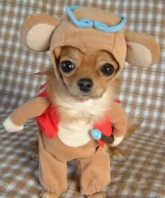 Funny-dog-costume_medium