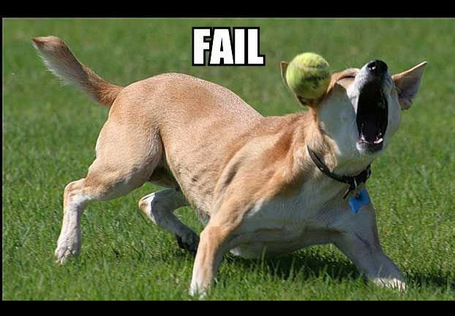 Fail_20dog_medium