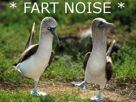 Fart-noise-birds_medium