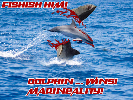 Dolphinwins_medium