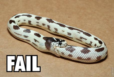 Snake_fail_medium