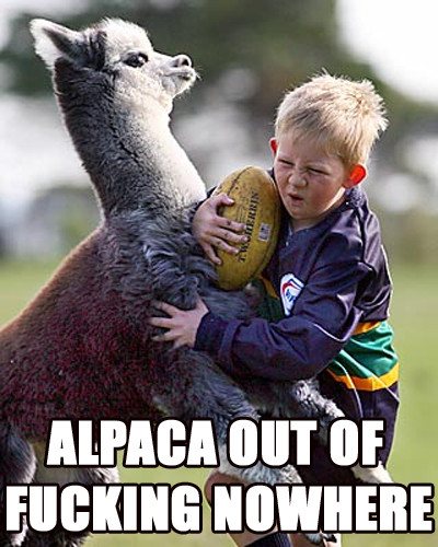 Alpaca-out-of-fucking-nowhere_medium