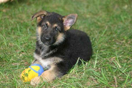 Puppy_027b_medium