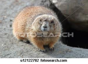 Beaver__u12122782_medium