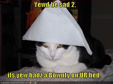Funny-pictures-sad-cat-bounty-on-head_medium