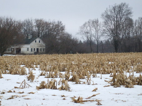 Illinois-winter-corn-field1_medium