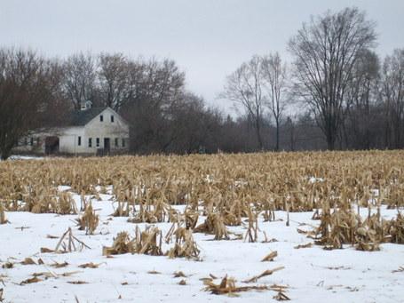 Illinois-winter-corn-field1_medium