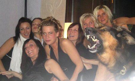 Partydog_medium