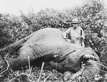 Nationa_geographic_theodore_roosevelt_safari_elephant_africa_medium