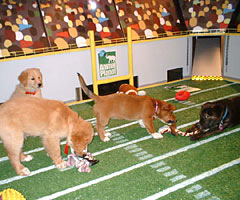 Puppybowl_medium