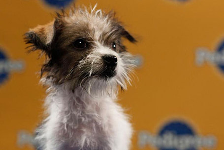 Puppy-bowl07_medium