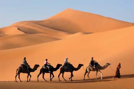 Camel1_medium