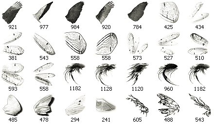 Wing-brushes_medium