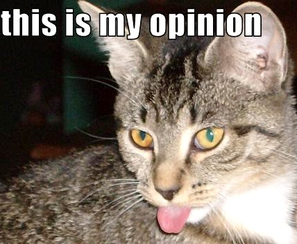 Funny-pictures-cat-hates-your-opinion_medium