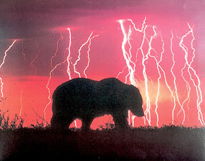 Bear-and-lightning-print-c10054522_medium