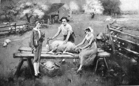 Sheep-shearing-branson-tn1_medium
