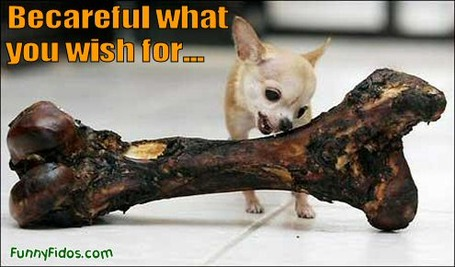 Funny-dog-picture-careful-what-you-wish-for_medium