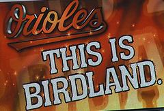 Birdland_medium