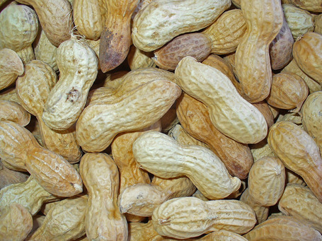 Arachis_hypogaea_004_jpg_medium
