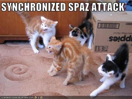 Funny-pictures-cats-have-a-spaz-attack_medium