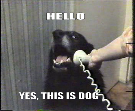 Hello-yes-this-is-dog_medium