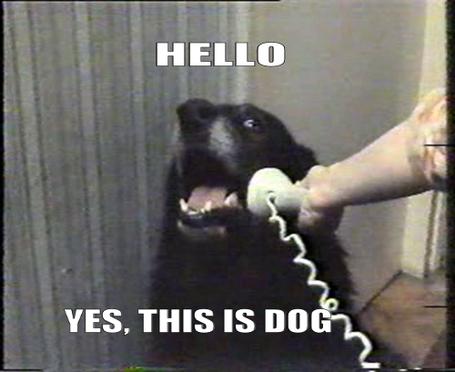 Hello-yes-this-is-dog_medium