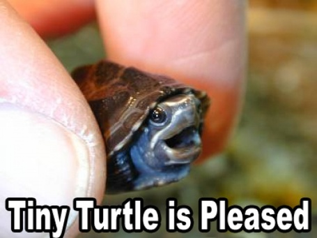 Tiny-turtle-is-pleased_medium