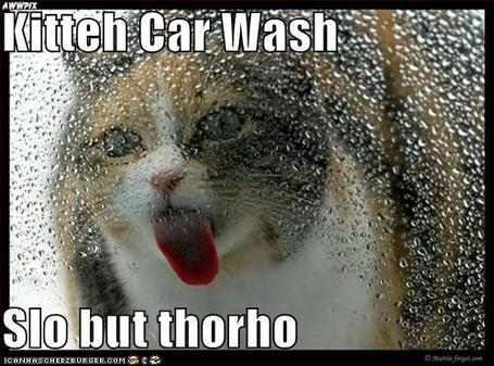 Funny-pictures-cat-licks-window-car_medium