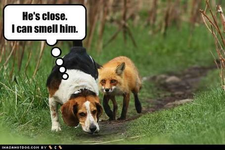 Funny-dog-pictures-hes-close-i-can-smell-him_medium