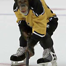 Ice_hockey_monkey