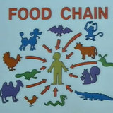 Simpsons-foodchain