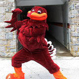Hokiebird1