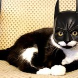 Batman_cat