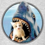 Kittenshark