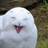 Smiley_owl_twitter