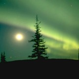 Northern-lights-with-spruce_547