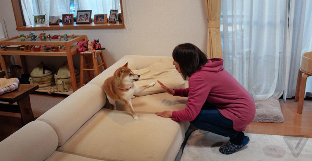 Doge-4